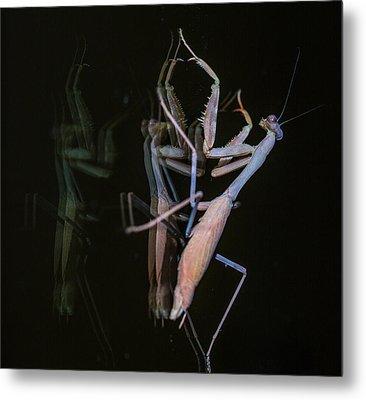 Praying Mantis 2 Metal Print by Angela A Stanton