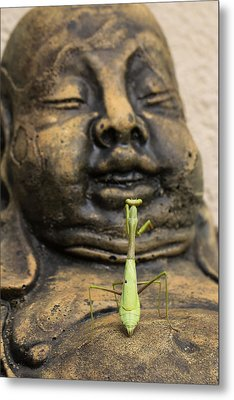Metal Print featuring the photograph Praying by Patricia Schaefer