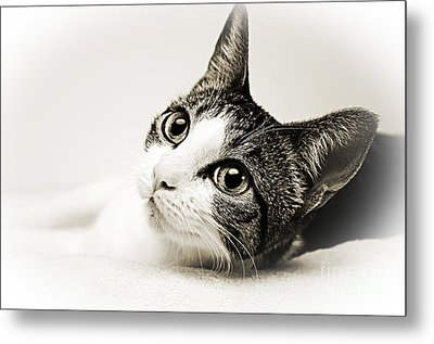 Precious Kitty Metal Print by Andee Design