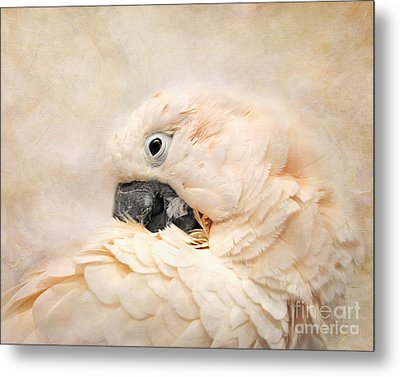Preening Metal Print by Jai Johnson