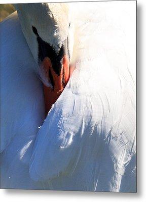 Preening Swan Metal Print by Cathy Donohoue