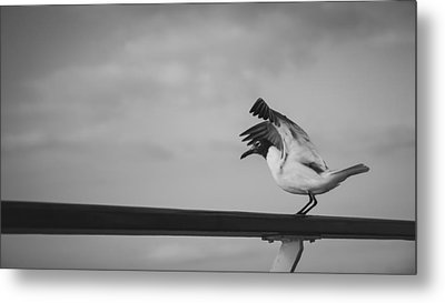 Preflight Metal Print by Maria Robinson
