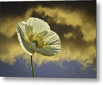 Prelude To Spring Metal Print by Lynn Bauer
