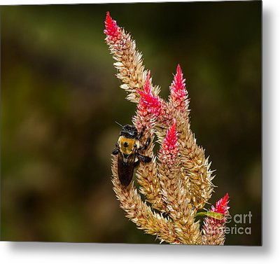Premature Hunt Metal Print by Dale Nelson