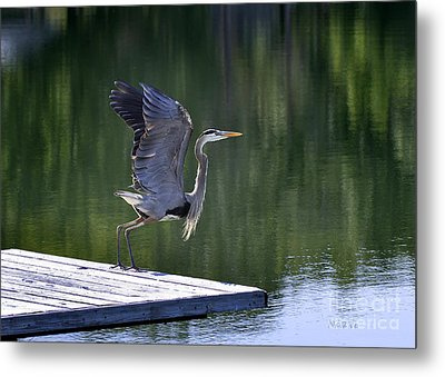 Metal Print featuring the photograph Preparing For Take Off by Nava Thompson