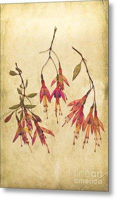 Pressed Fuchsia Flowers Metal Print by Jan Bickerton