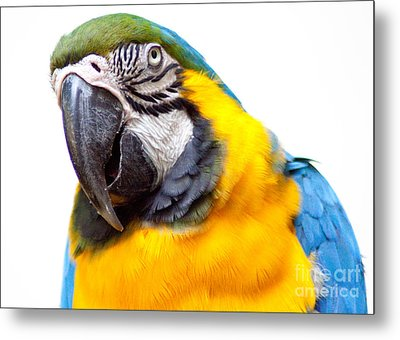 Metal Print featuring the photograph Pretty Bird by Roselynne Broussard