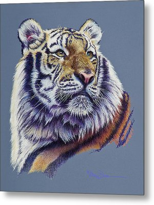 Pretty Boy Siberian Tiger Metal Print