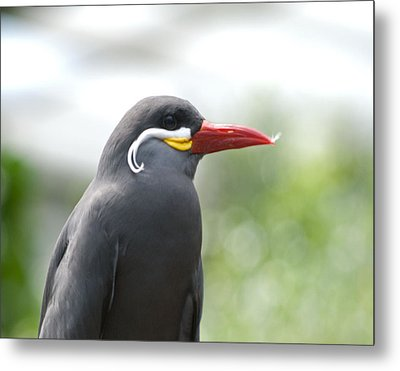 Pretty Boy Wil 193 Metal Print