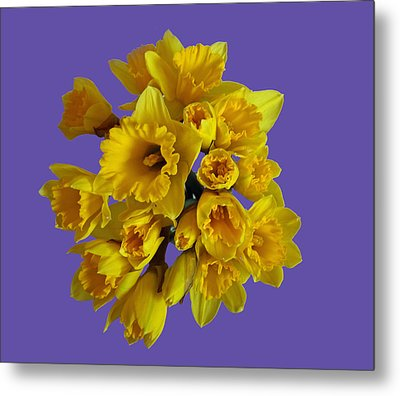 Pretty Daffodils Metal Print by Christopher Rowlands