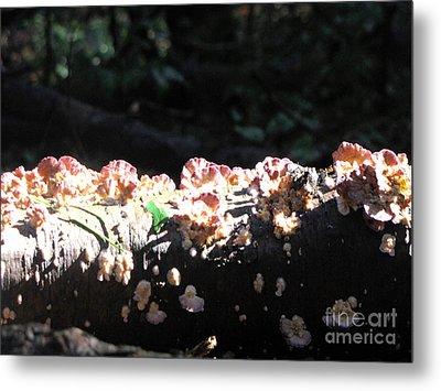 Pretty Fungus Metal Print