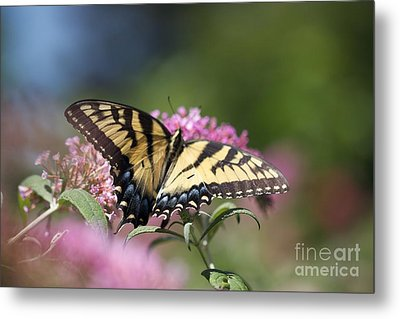 Pretty In Pink All Profits Go To Hospice Of The Calumet Area Metal Print
