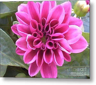 Pretty In Pink Metal Print by Angelia Hodges Clay