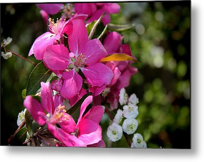 Pretty In Pink II Metal Print by Aya Murrells