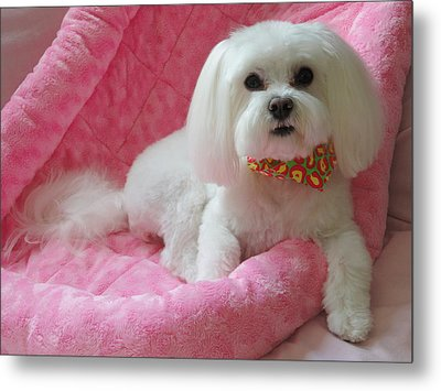 Pretty In Pink Metal Print by Mary Beth Landis