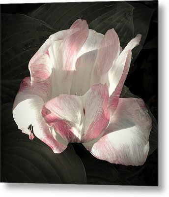Pretty In Pink Metal Print by Photographic Arts And Design Studio