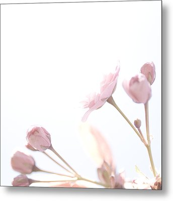 Pretty In Pink - The Dreamer Metal Print