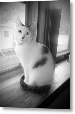 Pretty Kitty Metal Print