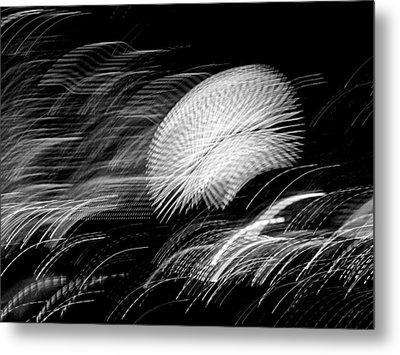 Metal Print featuring the photograph Pretty Little Cosmo - 6 by Larry Knipfing