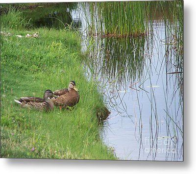 Mated Pair Of Ducks Metal Print by Eunice Miller