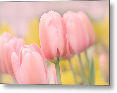 Pretty Pastel Pink Tulip Flowers Metal Print by Jennie Marie Schell