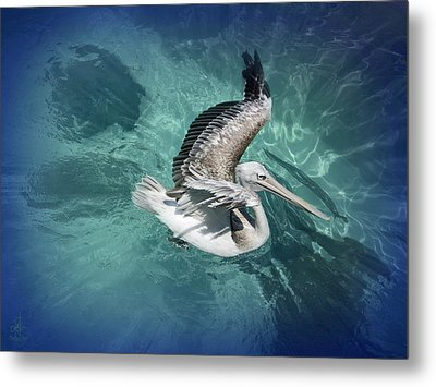 Metal Print featuring the photograph Pretty Pelican by Pennie  McCracken