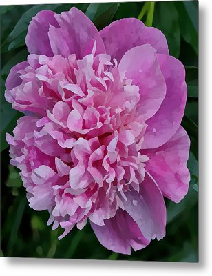 Pretty Peony Metal Print by Sandy Keeton