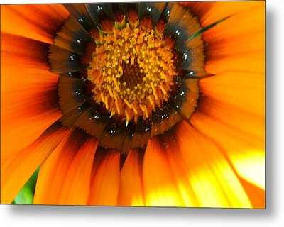 Pretty Petals 3 Metal Print by Tamara Bettencourt