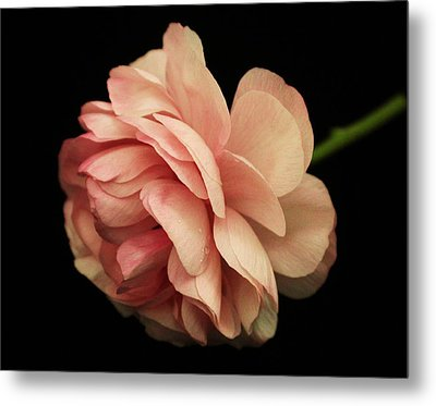 Pretty Pink Flower Metal Print by Carol Welsh