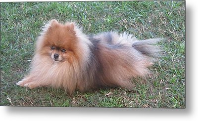 Metal Print featuring the photograph Pretty Pom by Fortunate Findings Shirley Dickerson
