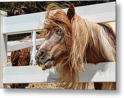Pretty Pony After Metal Print