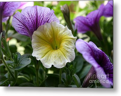 Pretty Yellow And Purple Petunias Metal Print by D Wallace