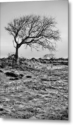 Prevailing Bw Metal Print by JC Findley