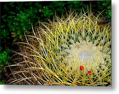 Prickly Metal Print by Camille Lopez