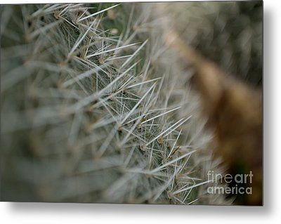 Metal Print featuring the photograph Prickly Pear by Scott Lyons