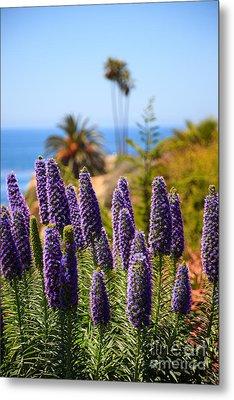 Pride Of Madeira Flowers In Orange County California Metal Print by Paul Velgos