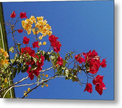 Metal Print featuring the photograph Primary Colors by Ginny Schmidt