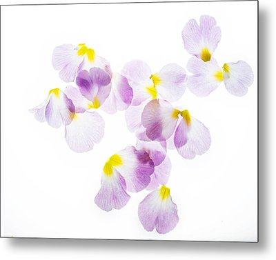 Primrose Petals 4 Metal Print