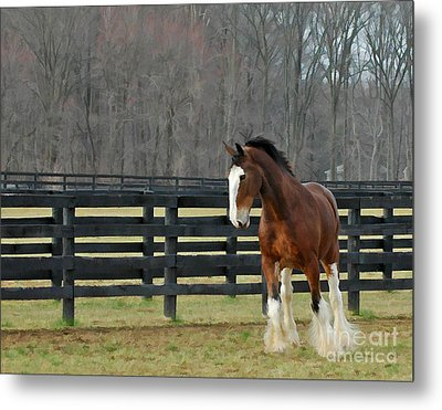Metal Print featuring the photograph Prince Charming by Sami Martin