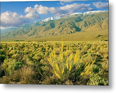 Princes Plume And White Mountains - Owens Valley California Metal Print by Ram Vasudev