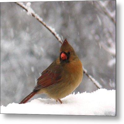 Princess In The Snow Metal Print by Leea Baltes