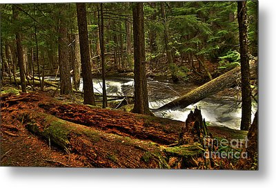 Metal Print featuring the photograph Pristine Forest by Sam Rosen