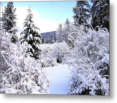 Pristine Winter Trail Metal Print by Will Borden