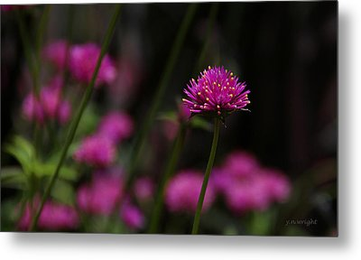 Pretty In Pink Metal Print by Yvonne Wright