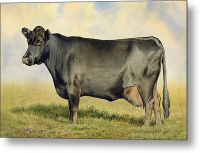 Prize Dexter Cow Metal Print by Anthony Forster