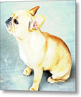 Profile In Frenchie Metal Print by Barbara Chichester