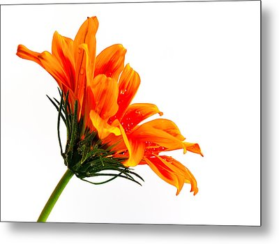 Metal Print featuring the photograph Profile Of A Flower by Marwan Khoury