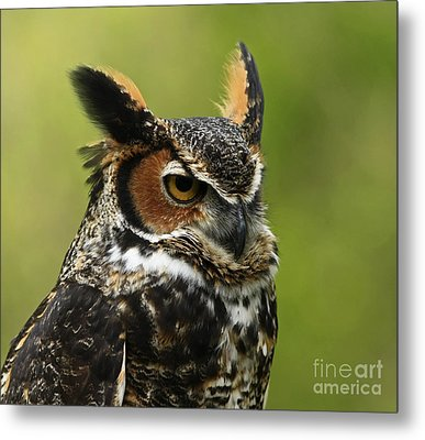 Profile Of A Great Horned Owl Metal Print by Inspired Nature Photography Fine Art Photography