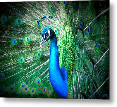Metal Print featuring the photograph Profile Of A Peacock  by Heidi Manly