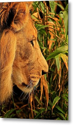 Profiles Of A King Metal Print by Laddie Halupa